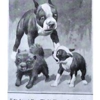1925 Cartoon – The Beans family  and a Chow puppy – Coolidge inspired no doubt