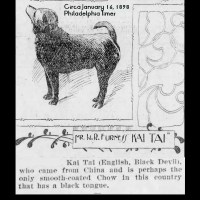 1898 Kai Tai – A very early smooth chow in Philadelphia -W.R. Furness owner