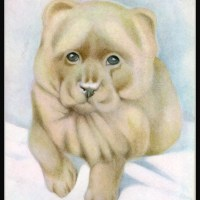 1914 E.J. Detmold Chow Illustration  – The Book of Baby Dogs