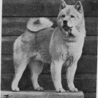 COLLECTION – Smooth Chow Photos from various sources (pre 1960)