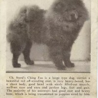 1934 Pedigree for Knif-Li with Steed's Ching Foo Stud card