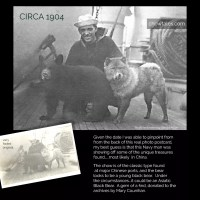 1904 Very rare photo of a Chow and a bear aboard a Navy ship – possible China imports