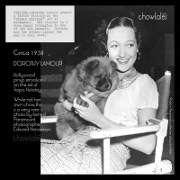 1938 Dorothy Lamour with a chow puppy on the set of Tropic Holiday