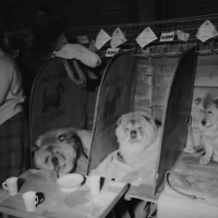 1965 Crufts Dog Show – England- video and catalog of chow entry