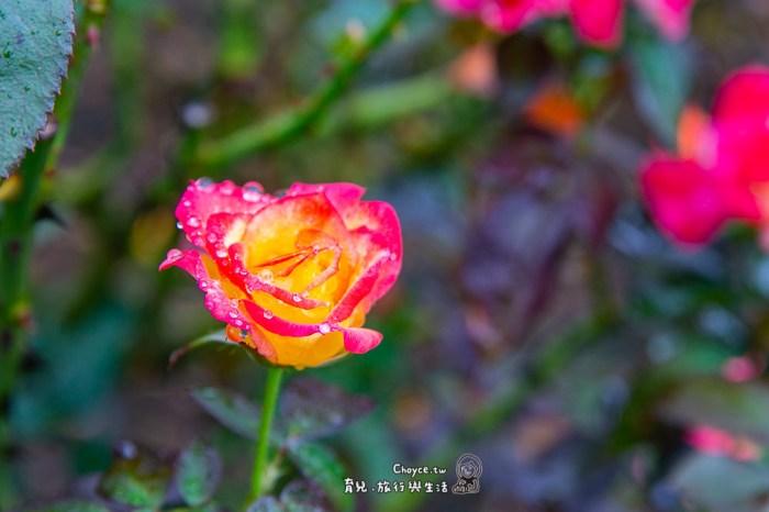 最讓詩人捨不得離去的岩手美地 花卷玫瑰園 花卷溫泉 免費觀光巴士