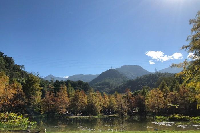 『南庄雲水度假森林』 季節限定的落羽松秘境 身心放鬆的風呂足湯