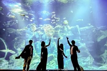 知識育樂都在這 秋田最好玩 男鹿半島Gao水族館 保育海洋知識一次到位