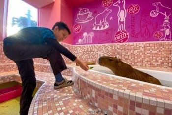 原宿可愛動物園 與水豚君零距離 親近小動物 Animal Cafe ふれあい動物カフェ