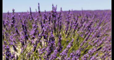 (歐洲) 法國南部的紫色嘉年華!!!南法薰衣草(相關產品)採購指南