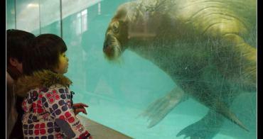 (日本靜岡縣) 伊豆.三津海洋樂園 海豚跳舞、海獅寫毛筆、企鵝遊行