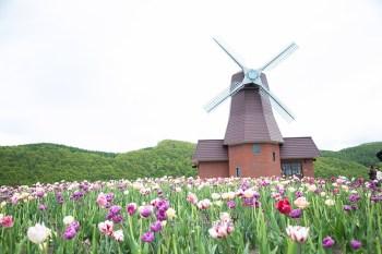 春之北海道 120萬株鬱金香繽紛登場 上湧別鬱金香花園 春爛漫的好時節 上湧別チューリップ公園