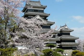 (日本) 長野縣松本城 壯闊中帶著華麗 櫻吹雪美景不容錯過
