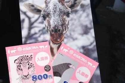 (日本北海道) 旭山動物園 企鵝遊行開始囉!跟著企鵝搖搖擺擺逛大街
