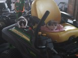 The new kittens, Spooky & Peek-a-boo, in their favorite spot