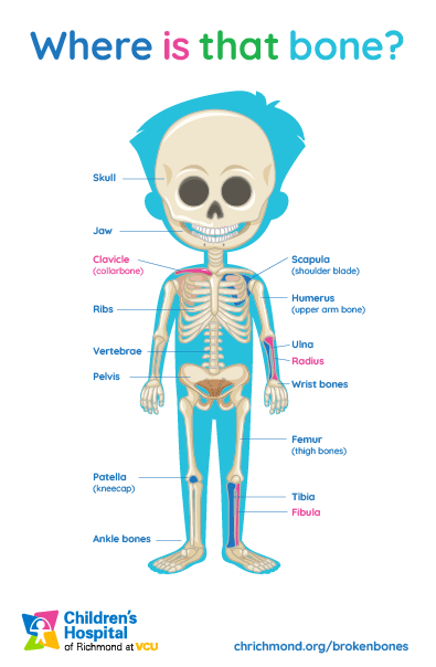 How Many Bones Does A Baby Have : bones, Broken, Bones:, Bruise?, Children's, Hospital, Richmond