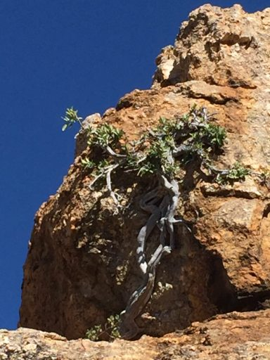 In the rocky outcrops above Okahandja, the struggle continues...