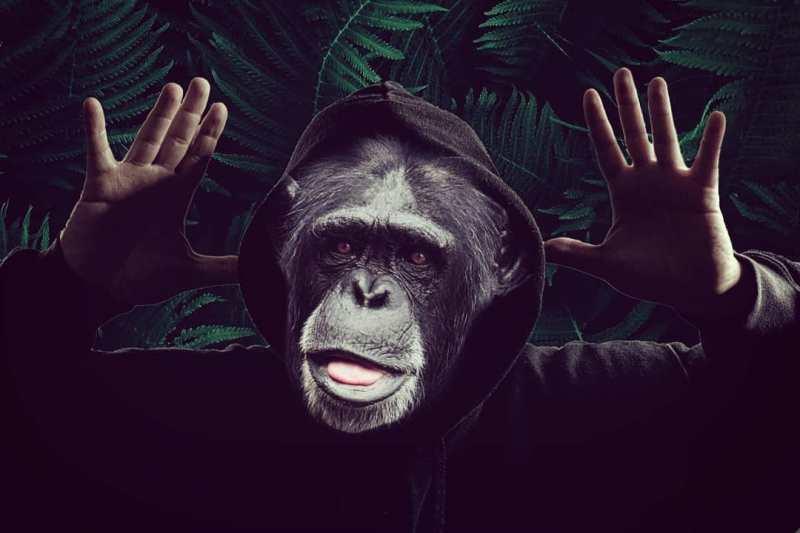 Das tägliche Affentheater in den sozialen Medien
