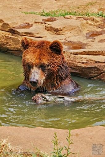 the water is not warm enough for me (airnya kurang hangat buat berendem nih)