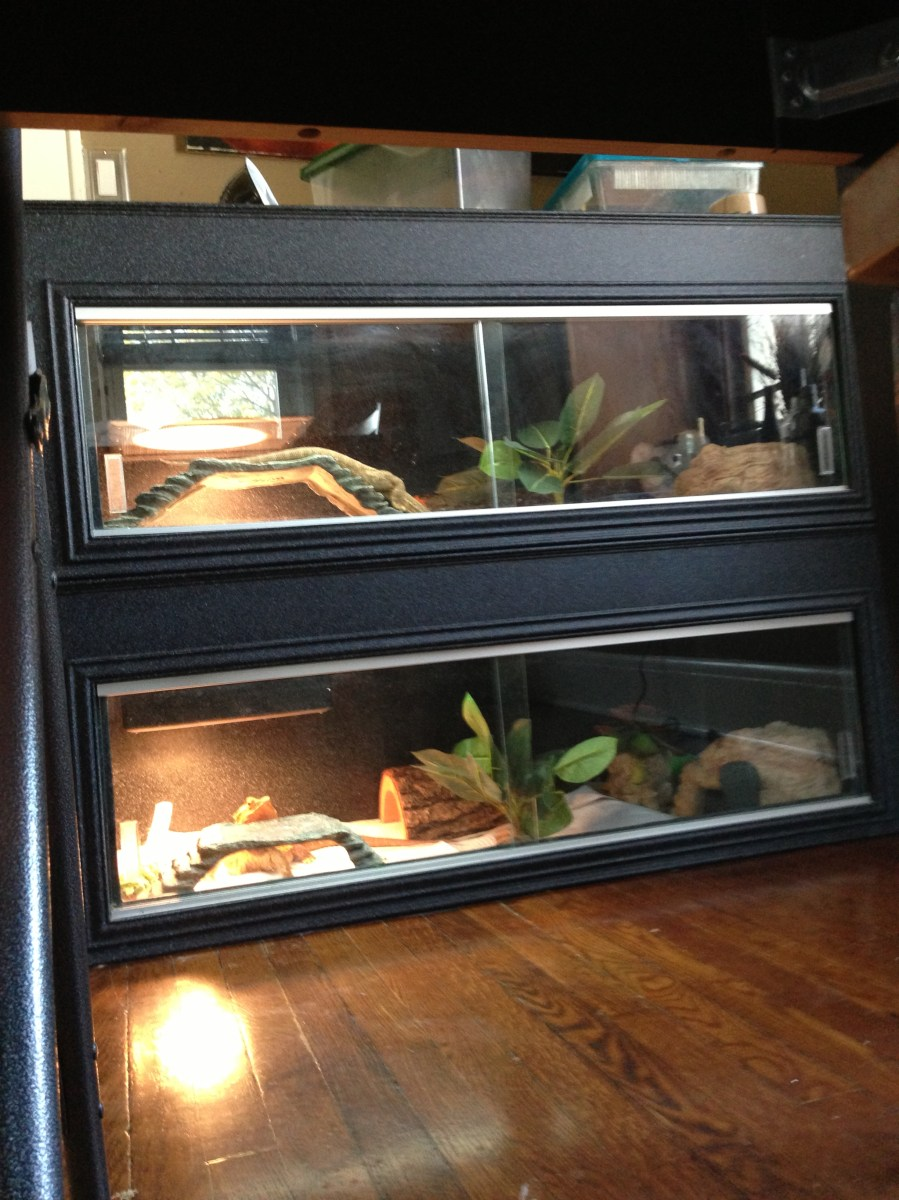 Update Reptile Cage Options Still Seeking Perfection