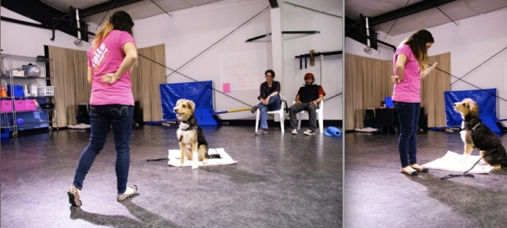 Me teaching group obedience classes, demonstrating for my clients.