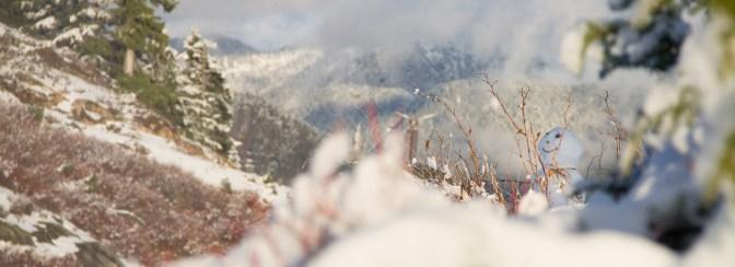 Grouse in Winter - WP header