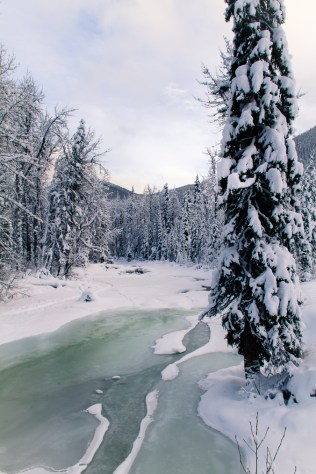 Manning Park at Christmas-6