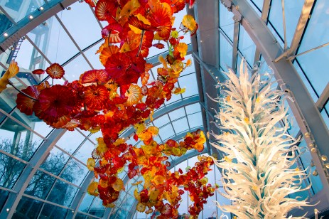 chihuly-21