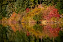 whistler-in-fall-16
