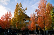 whistler-in-fall-6