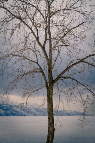 okanagen-lake-south-4