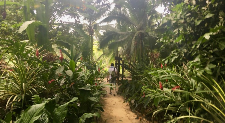 Picture of man walking through jungle trail