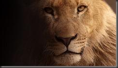 lion-617365_960_720
