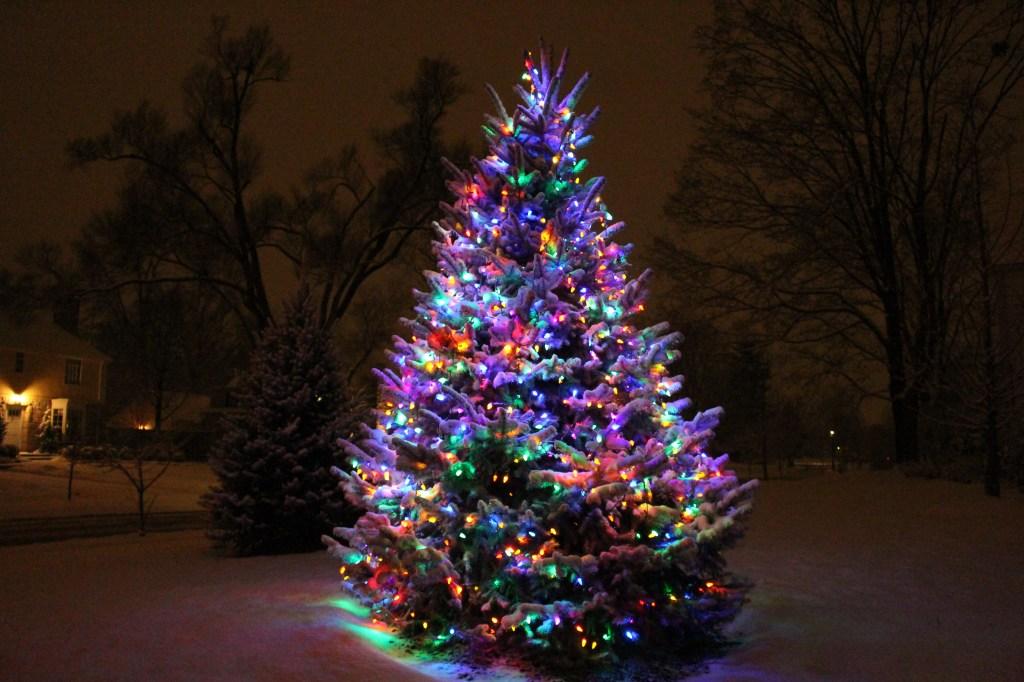 snowtree1_s