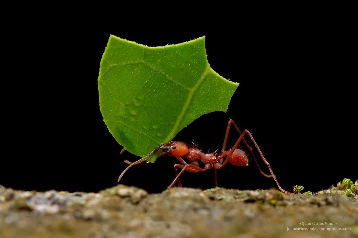 Insects  Neotropic Photo Tours