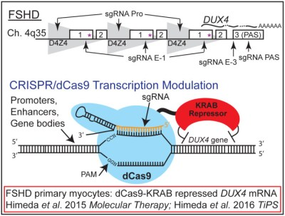 CRISPR MD Figure v11