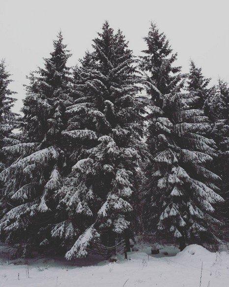 Winterberg Baum Winter