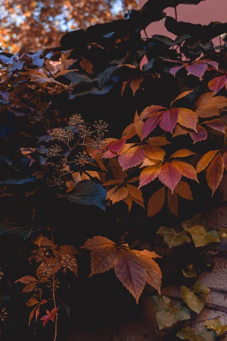 Herbstfarben in Quedlinburg