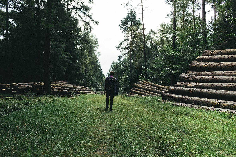 Waldweg in der Lüneburger Heide