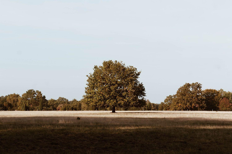 Einsamer Baum in der Lüneburger Heide