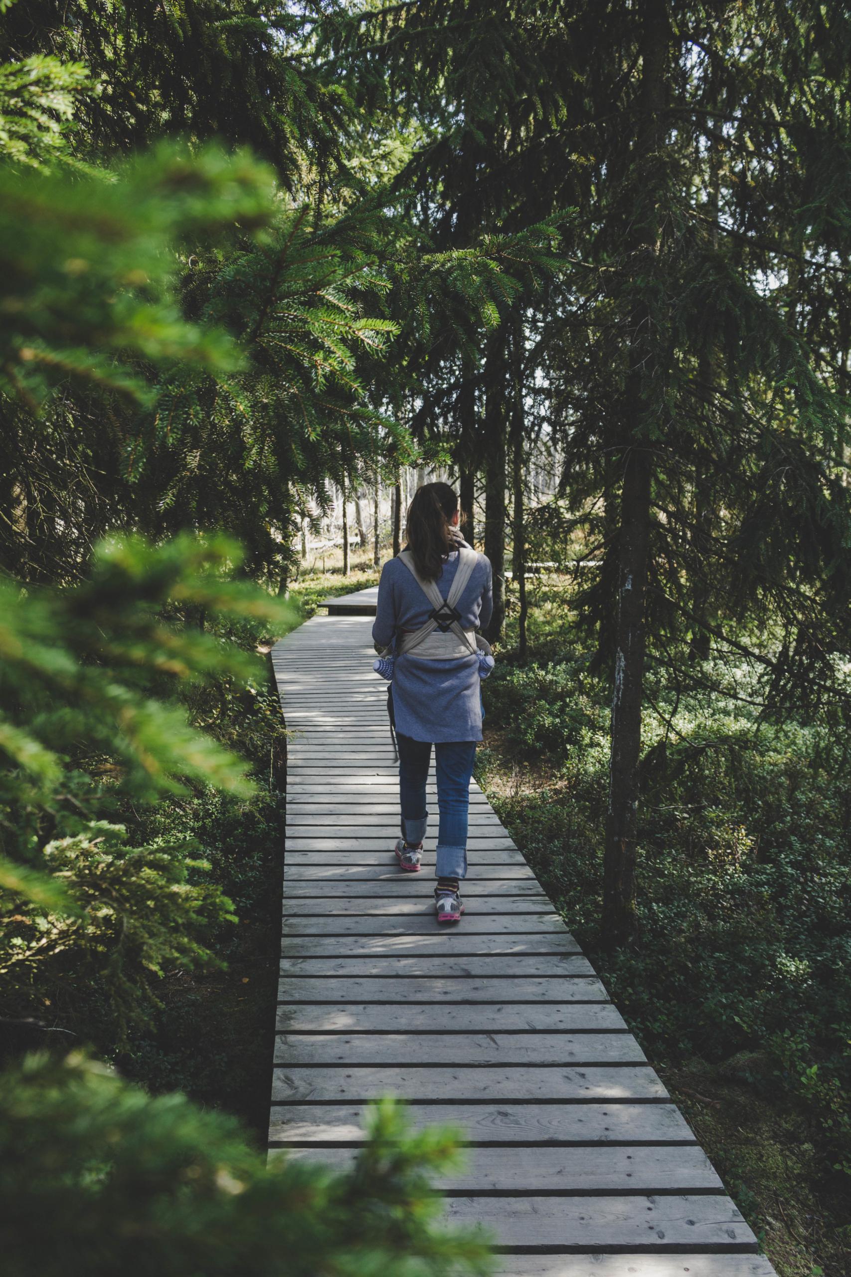 Wanderung auf dem Holzsteg im Torfhausmoor