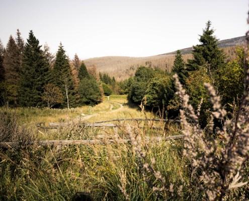 Wanderweg im Torfhausmoor