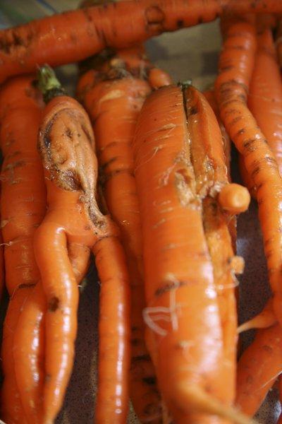 dog carrots