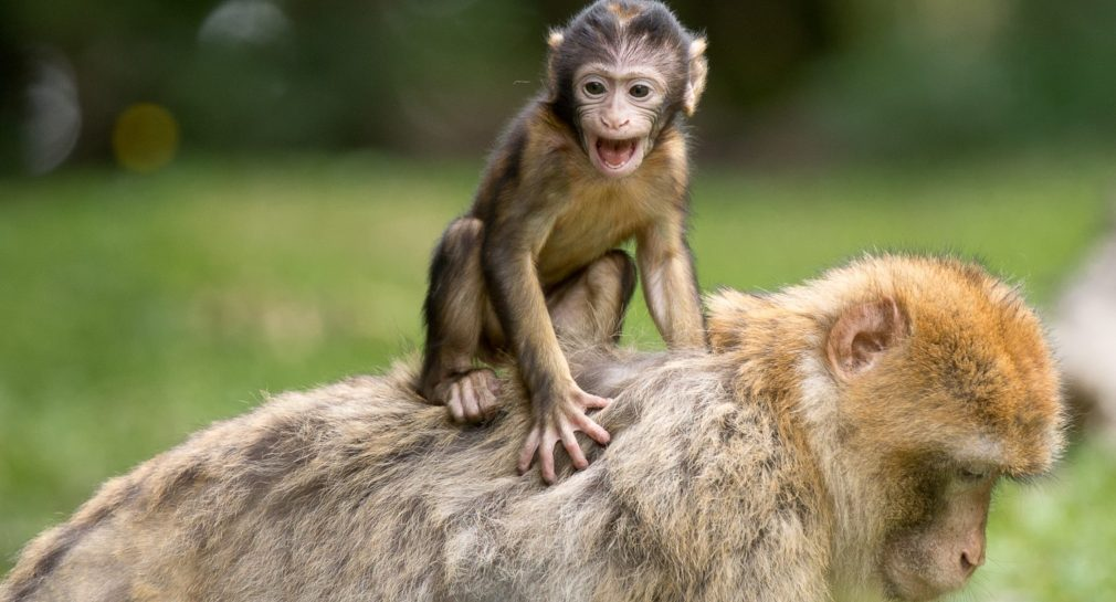 Research reveals just how similar humans and other animals are