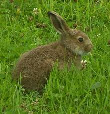 Management Of Rabbits Business Tip / Business Plan