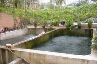 How To Own A Mega Fish Farm Business In Nigeria