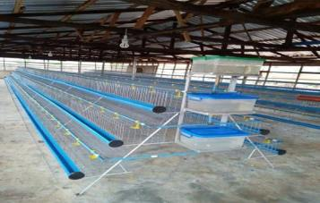 Cheap Battery Cage Sales In All Parts Of Nigeria