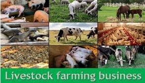 Profitable Livestock Farming In Nigeria