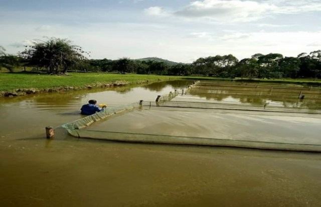 Fish Farming Business Free Template With Free Consultation