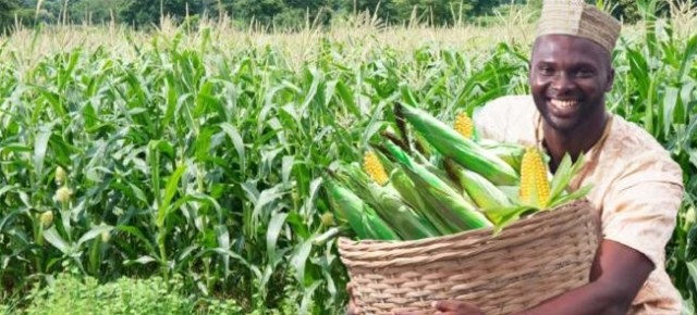 Maize Farming/Processing on Business Plans and Feasibility Study Report