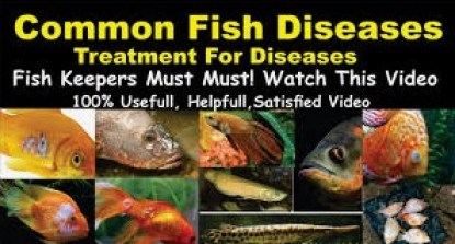 Fish Diseases|Management Practices And Cure